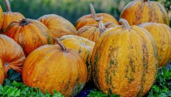 Zdravlje / Pripremite se za borbu: Šest jesenjih namirnica za čelični imunitet